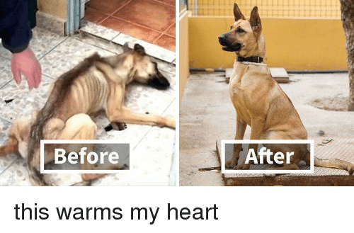 before after: Before  After this warms my heart
