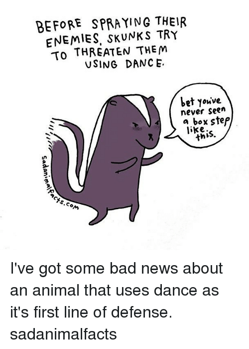 Bad, Memes, and News: BEFORE SPRAYING THEIR  ENEMIES. SKUNK TRY  To THREATEN THEM  USING DANCE.  Let Youve  never seen  a box step  like.  TS.co I've got some bad news about an animal that uses dance as it's first line of defense. sadanimalfacts