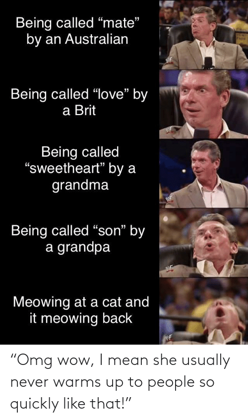 "a cat: Being called ""mate""  by an Australian  Being called ""love"" by  a Brit  Being called  ""sweetheart"" by a  grandma  Being called ""son"" by  a grandpa  Meowing at a cat and  it meowing back  WF ""Omg wow, I mean she usually never warms up to people so quickly like that!"""