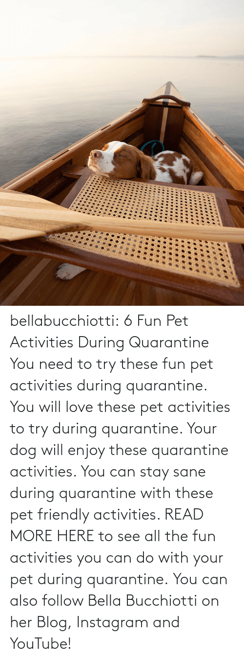 Www Youtube Com: bellabucchiotti:  6 Fun Pet Activities During Quarantine    You need to try  these fun pet activities during quarantine. You will love these pet  activities to try during quarantine. Your dog will enjoy these  quarantine activities. You can stay sane during quarantine with these  pet friendly activities.   READ MORE HERE to see all the fun activities you can do with your pet during quarantine.  You can also follow Bella Bucchiotti on her Blog, Instagram and YouTube!