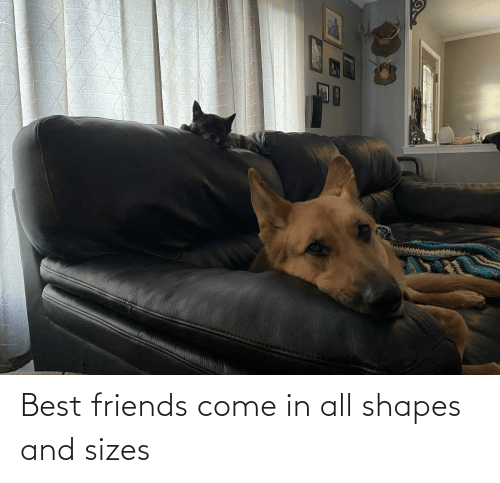 shapes: Best friends come in all shapes and sizes