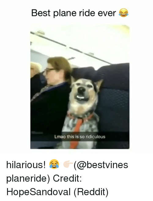 Lmao, Memes, and Reddit: Best plane ride ever  Lmao this is so ridiculous hilarious! 😂 👉🏻(@bestvines planeride) Credit: HopeSandoval (Reddit)