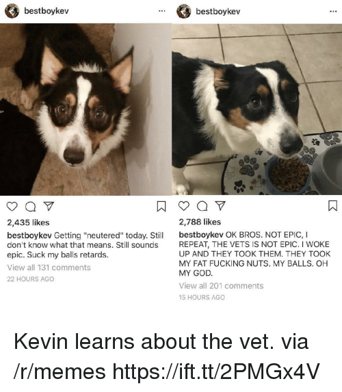 """Fucking, God, and Memes: bestboykev  bestboykev  2,435 likes  2,788 likes  bestboykev Getting """"neutered"""" today. Stil bestboykev OK BROS. NOT EPIC, I  don't know what that means. Still sounds  epic. Suck my balls retards.  View all 131 comments  22 HOURS AGO  REPEAT, THE VETS IS NOT EPIC. I WOKE  UP AND THEY TOOK THEM. THEY TOOK  MY FAT FUCKING NUTS. MY BALLS. OH  MY GOD  View all 201 comments  15 HOURS AGO Kevin learns about the vet. via /r/memes https://ift.tt/2PMGx4V"""