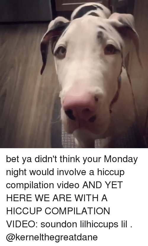 hiccups: bet ya didn't think your Monday night would involve a hiccup compilation video AND YET HERE WE ARE WITH A HICCUP COMPILATION VIDEO: soundon lilhiccups lil . @kernelthegreatdane