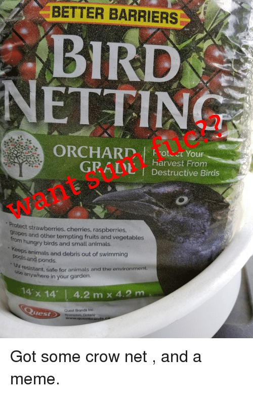 Animals, Hungry, and Meme: BETTER BARRIERS  BIRD  NETTING  Harvest From  GRALIL I Destructive Birds  want sum fuc??  Protect strawberries, cherries, raspberries  grapes and other tempting fruits and vegetables  hungry birds and small animals.  Keeps animals and debris out of swimming  pools and ponds.  resistant, safe for animals and the environment  anywhere in your garden.  14 x 14'  4.2 m x 42m  Quest Brands Inc  Srampton, Ontario  www.questiorands