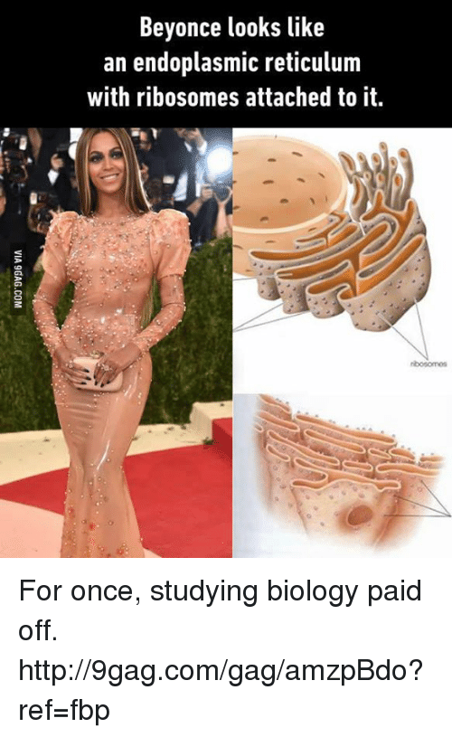 9gag, Beyonce, and Dank: Beyonce looks like  an endoplasmic reticulum  with ribosomes attached to it.  ribosomoS For once, studying biology paid off. http://9gag.com/gag/amzpBdo?ref=fbp