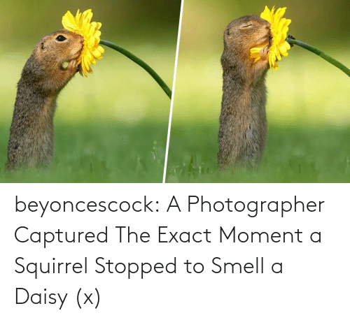 Smell, Target, and Tumblr: beyoncescock:   A Photographer Captured The Exact Moment a Squirrel Stopped to Smell a Daisy (x)