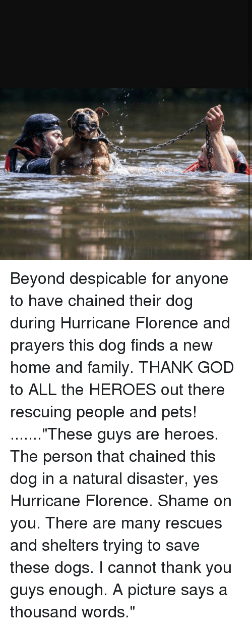 """Dogs, Family, and God: Beyond despicable for anyone to have chained their dog during Hurricane Florence and prayers this dog finds a new home and family. THANK GOD to ALL the HEROES out there rescuing people and pets! .......""""These guys are heroes. The person that chained this dog in a natural disaster, yes Hurricane Florence. Shame on you. There are many rescues and shelters trying to save these dogs. I cannot thank you guys enough. A picture says a thousand words."""""""