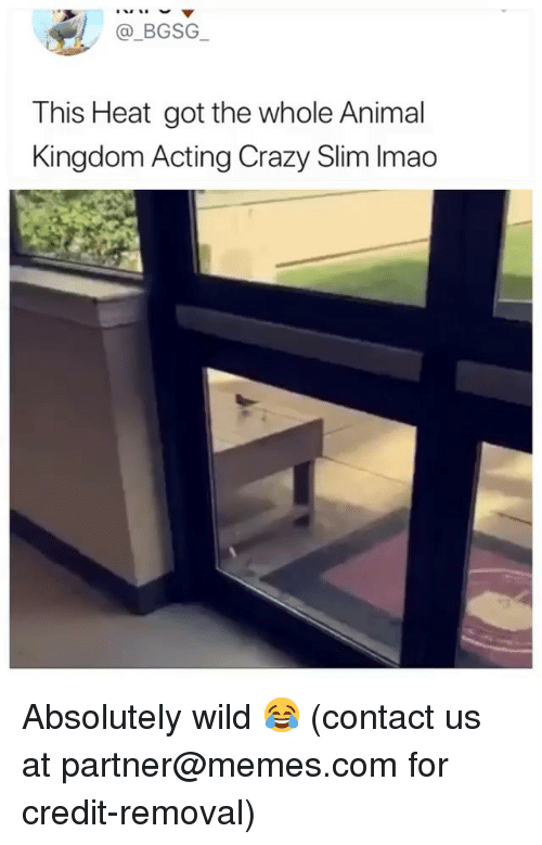 animal kingdom: @_BGSG  This Heat got the whole Animal  Kingdom Acting Crazy Slim Imao Absolutely wild 😂 (contact us at partner@memes.com for credit-removal)