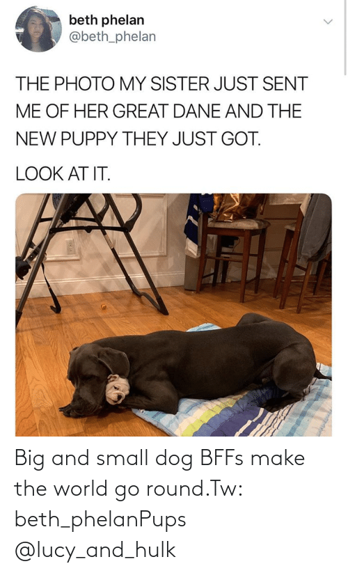 Lucy: Big and small dog BFFs make the world go round.Tw: beth_phelanPups @lucy_and_hulk