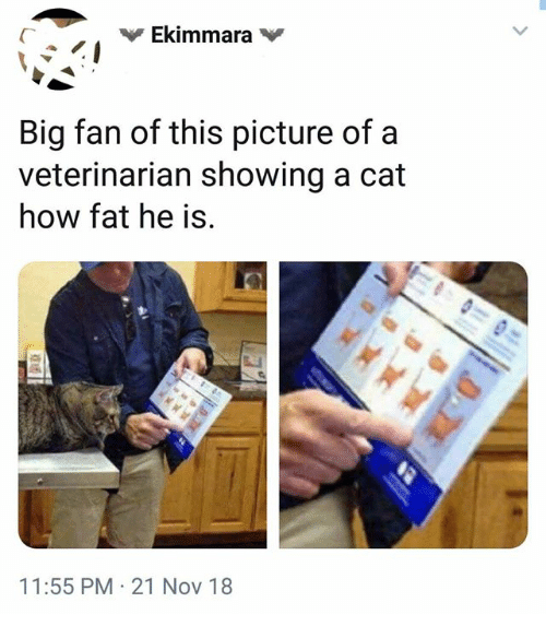 Dank, Veterinarian, and Fat: Big fan of this picture of a  veterinarian showing a cat  how fat he is  11:55 PM 21 Nov 18