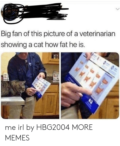 Dank, Memes, and Target: Big fan of this picture of a veterinarian  showing a cat how fat he is. me irl by HBG2004 MORE MEMES