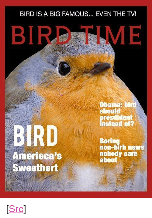 """News, Obama, and Reddit: BIRD IS A BIG FAMOUS... EVEN THE TV!  BIRD TIME  Obama: bird  should  presdident  instead of?  BIRD  Boring  non-birb news  nobody care  about  Amerieca's  Sweethert <p>[<a href=""""https://www.reddit.com/r/surrealmemes/comments/8j3dkf/bird_fing_a_new_big_and_a_famous_collect_in/"""">Src</a>]</p>"""