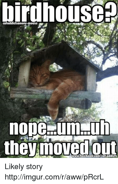 Aww, Memes, and Imgur: birdhouse  nope dumpuh  the moved www.facebook.com/cat addicts Likely story  http://imgur.com/r/aww/pRcrL