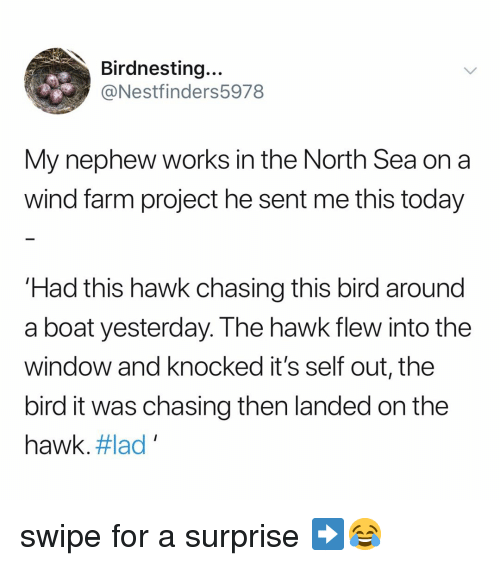 Today, Relatable, and Boat: Birdnesting...  @Nestfinders5978  My nephew works in the North Sea on a  wind farm project he sent me this today  Had this hawk chasing this bird around  a boat yesterday. The hawk flew into the  window and knocked it's self out, the  bird it was chasing then landed on the  hawk. #lad , swipe for a surprise ➡️😂