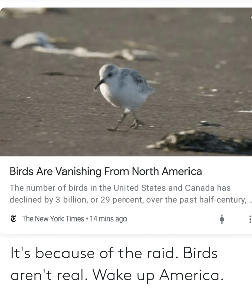 America, New York, and Birds: Birds Are Vanishing From North America  The number of birds in the United States and Canada has  declined by 3 billion, or 29 percent, over the past half-century, .  C The New York Times  14 mins ago It's because of the raid. Birds aren't real. Wake up America.