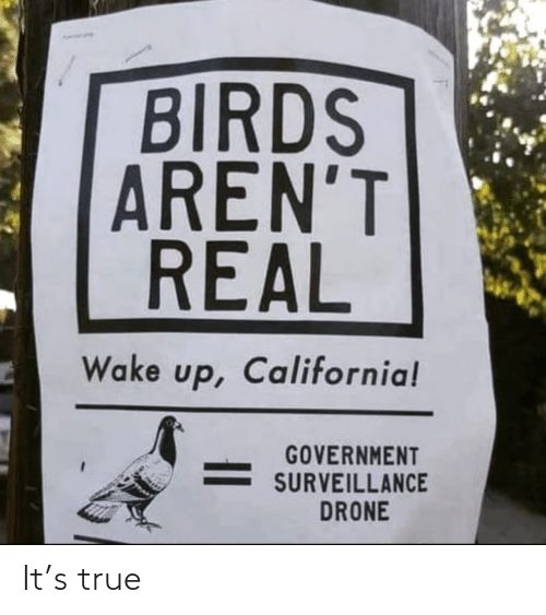 Birds: BIRDS  AREN'T  REAL  Wake up, California!  GOVERNMENT  SURVEILLANCE  DRONE It's true