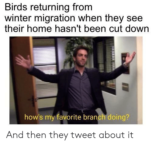Winter, Birds, and Home: Birds returning from  winter migration when they see  their home hasn't been cut down  how's my favorite branch doing? And then they tweet about it