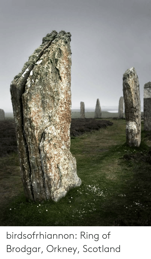 Tumblr, Blog, and Http: birdsofrhiannon:  Ring of Brodgar, Orkney, Scotland