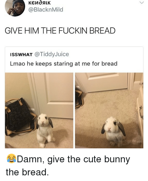 Cute, Lmao, and Memes: @BlacknMild  GIVE HIM THE FUCKIN BREAD  ISSWHAT @TiddyJuice  Lmao he keeps staring at me for bread 😂Damn, give the cute bunny the bread.