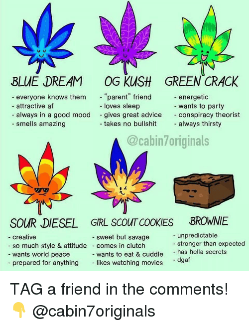 "Advice, Af, and Cookies: BLUE DREAM OG KUSH GREEN CRACK  everyone knows them  attractive af  always in a good mood  parent"" friend  loves sleep  energetic  wants to party  conspiracy theorist  always thirsty  gives great advice  - smells amazing  takes no bullshit  @cabin7originals  SOUR DIESEL GRL SCOUT COOKIES BROWNIE  unpredictable  stronger than expected  sweet but savage  creative  so much style & attitude comes in clutch  wants world peace  wants to eat & cuddle has hella secrets  likes watching movies  - dgaf  - prepared for anything TAG a friend in the comments! 👇 @cabin7originals"