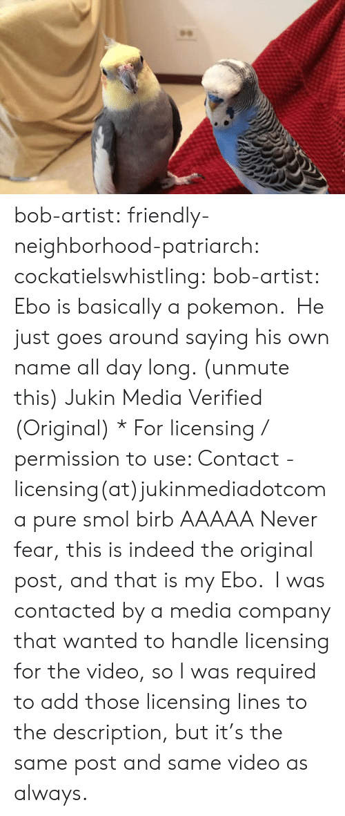 Pokemon, Tumblr, and Blog: bob-artist:  friendly-neighborhood-patriarch:  cockatielswhistling:   bob-artist:  Ebo is basically a pokemon. He just goes around saying his own name all day long. (unmute this) Jukin Media Verified (Original) * For licensing / permission to use: Contact - licensing(at)jukinmediadotcom  a pure smol birb   AAAAA  Never fear, this is indeed the original post, and that is my Ebo. I was contacted by a media company that wanted to handle licensing for the video, so I was required to add those licensing lines to the description, but it's the same post and same video as always.