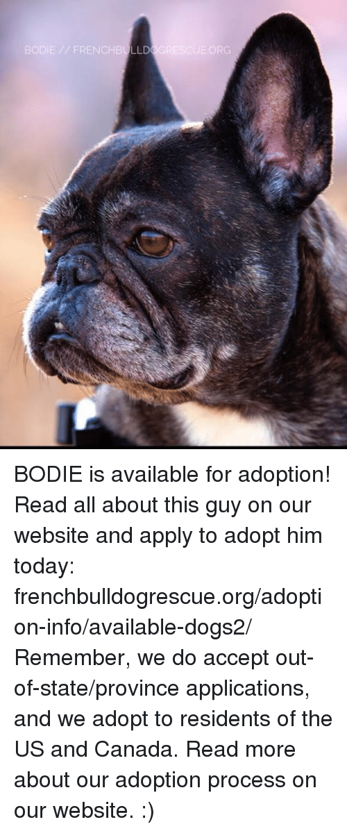 Memes, Canada, and 🤖: BODIE // FRENCHB LLD  ③GRESCUE.ORG BODIE is available for adoption! Read all about this guy on our website and apply to adopt him today: frenchbulldogrescue.org/adoption-info/available-dogs2/  Remember, we do accept out-of-state/province applications, and we adopt to residents of the US and Canada. Read more about our adoption process on our website. :)