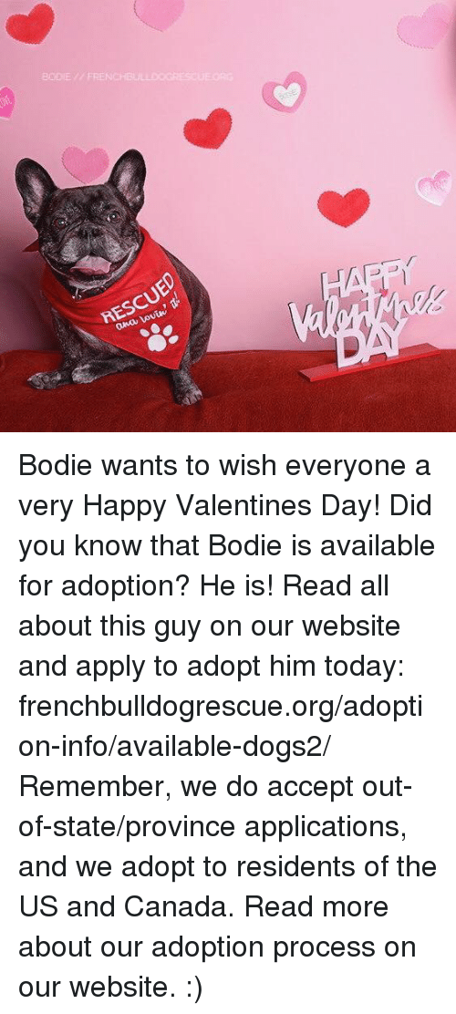 Memes, 🤖, and Ana: BODIE // FRENCHBU  RESCUED  ana Lovin, Bodie wants to wish everyone a very Happy Valentines Day!  Did you know that Bodie is available for adoption? He is! Read all about this guy on our website and apply to adopt him today: frenchbulldogrescue.org/adoption-info/available-dogs2/  Remember, we do accept out-of-state/province applications, and we adopt to residents of the US and Canada. Read more about our adoption process on our website. :)