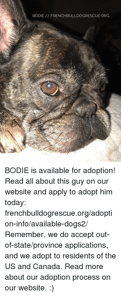 Memes, Canada, and 🤖: BODIE FRENCHBULLDOGRESCUE.ORG BODIE is available for adoption! Read all about this guy on our website  and apply to adopt him today: frenchbulldogrescue.org/adoption-info/available-dogs2/  Remember, we do accept out-of-state/province applications, and we adopt to residents of the US and Canada. Read more about our adoption process on our website. :)