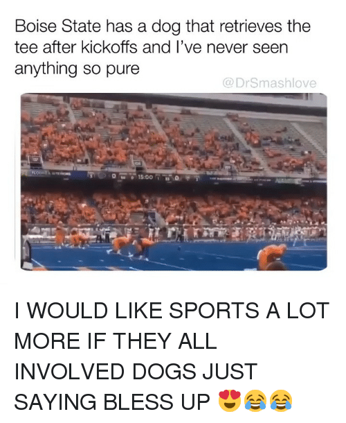 Bless Up, Dogs, and Memes: Boise State has a dog that retrieves the  tee after kickoffs and l've never seen  anything so pure  @DrSmashlove I WOULD LIKE SPORTS A LOT MORE IF THEY ALL INVOLVED DOGS JUST SAYING BLESS UP 😍😂😂