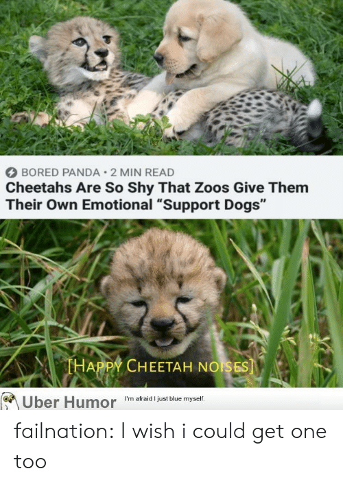 "Bored, Dogs, and Tumblr: BORED PANDA 2 MIN READ  Cheetahs Are So Shy That Zoos Give Them  Their Own Emotional ""Support Dogs""  THAPPY CHEETAH NOISES  Uber Humor  I'm afraid I just blue myself. failnation:  I wish i could get one too"