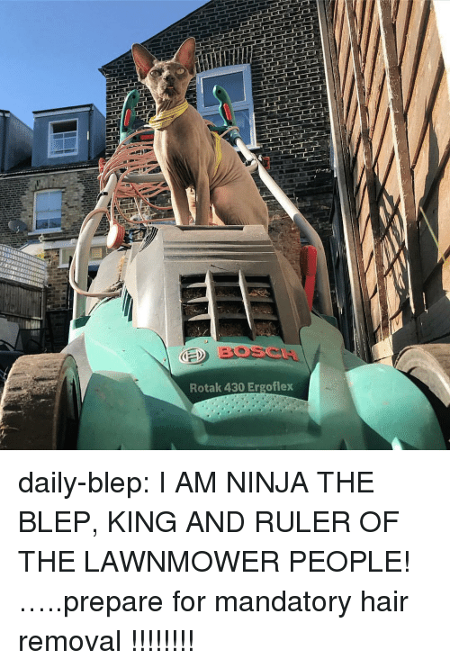 Tumblr, Blog, and Hair: BOSCA  Rotak 430 Ergoflex daily-blep:  I AM NINJA THE BLEP, KING AND RULER OF THE LAWNMOWER PEOPLE!…..prepare for mandatory hair removal !!!!!!!!