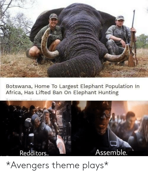 Elephant: Botswana, Home To Largest Elephant Population In  Africa, Has Lifted Ban On Elephant Hunting  Assemble.  Redditors. *Avengers theme plays*
