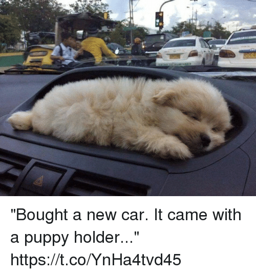 "Memes, Puppy, and 🤖: ""Bought a new car. It came with a puppy holder..."" https://t.co/YnHa4tvd45"