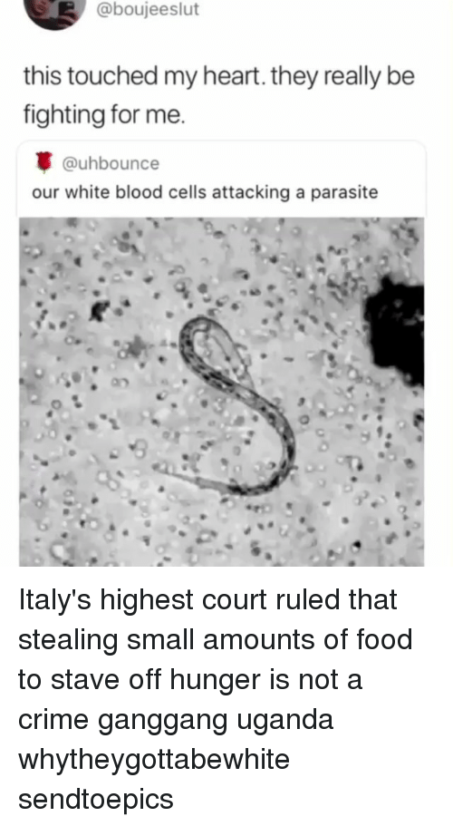 Crime, Food, and Memes: @boujeeslut  this touched my heart. they really be  fighting for me.  @uhbounce  our white blood cells attacking a parasite Italy's highest court ruled that stealing small amounts of food to stave off hunger is not a crime ganggang uganda whytheygottabewhite sendtoepics