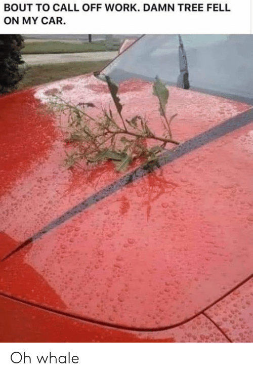 whale: BOUT TO CALL OFF WORK. DAMN TREE FELL  ON MY CAR. Oh whale