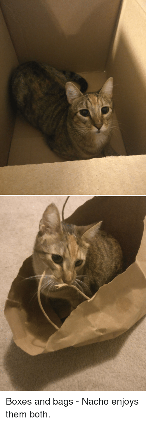 Them, Bags, and Nacho: Boxes and bags - Nacho enjoys them both.