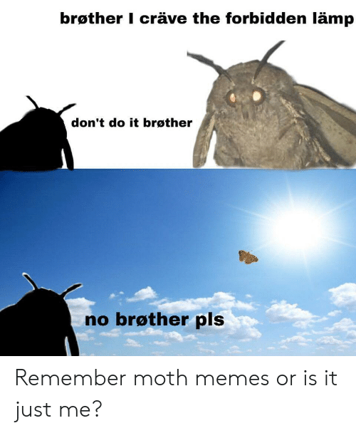 Memes, Moth, and Lamp: brøther I cräve the forbidden lämp  don't do it brøther  no brøther pls Remember moth memes or is it just me?