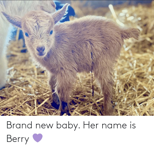 brand new: Brand new baby. Her name is Berry 💜