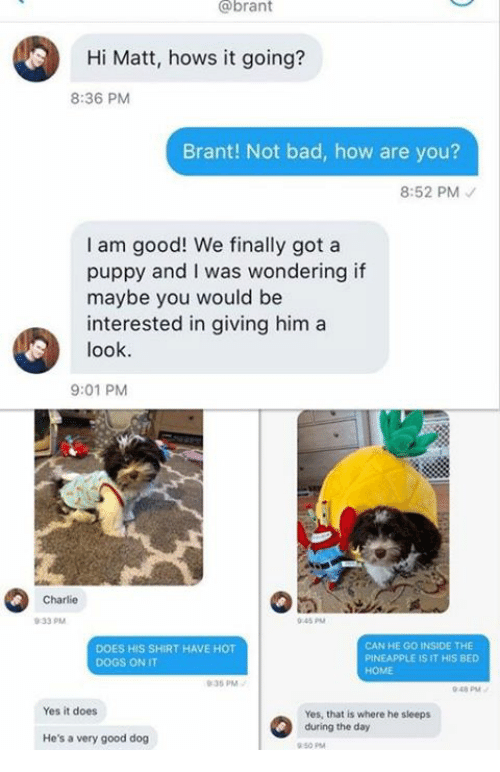 Hows It Going: @brant  Hi Matt, hows it going?  8:36 PM  Brant! Not bad, how are you?  8:52 PM  I am good! We finally got a  puppy and I was wondering if  maybe you would be  interested in giving him a  look  9:01 PM  Charlie  0-33 PM  045 PM  DOES HIS SHIRT HAVE HOT  DOGS ON IT  CAN HE GO INSIDE THE  PINEAPPLE IS IT HIS BED  HOME  35 PM  048 PM  Yes it does  Yes, that is where he sieeps  during the day  He's a very good dog  50 PM