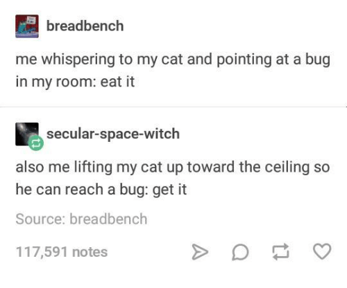 Space, Humans of Tumblr, and Witch: breadbench  me whispering to my cat and pointing at a bug  in my room: eat it  secular-space-witch  also me lifting my cat up toward the ceiling so  he can reach a bug: get it  Source: breadbench  117,591 notes