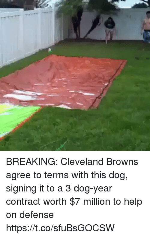 Cleveland Browns, Football, and Nfl: BREAKING: Cleveland Browns agree to terms with this dog, signing it to a 3 dog-year contract worth $7 million to help on defense https://t.co/sfuBsGOCSW