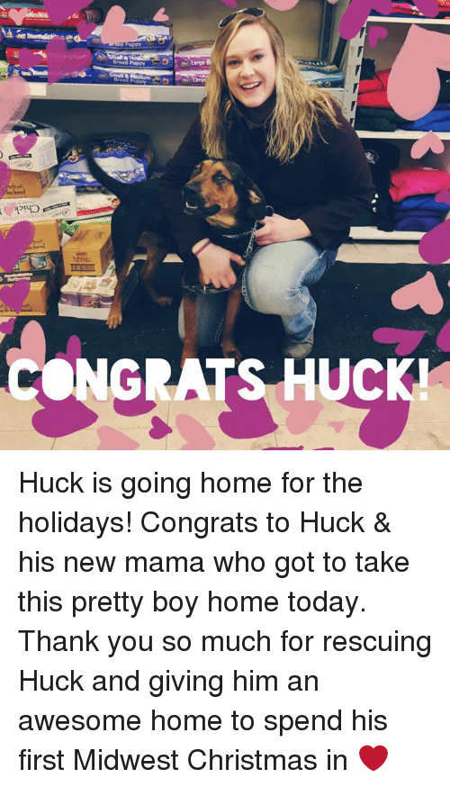 Pretty Boy: Breed Puppy  CONGRATS UC Huck is going home for the holidays! Congrats to Huck & his new mama who got to take this pretty boy home today. Thank you so much for rescuing Huck and giving him an awesome home to spend his first Midwest Christmas in ❤️