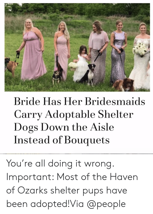 Dogs, Instagram, and Target: Bride Has Her Bridesmaids  Carry Adoptable Shelter  Dogs Down the Aisle  Instead of Bouquets You're all doing it wrong. Important: Most of the Haven of Ozarks shelter pups have been adopted!Via @people