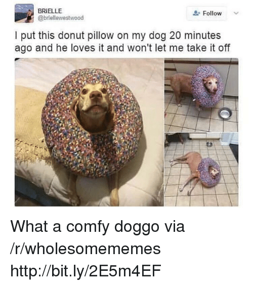 Http, Doggo, and Dog: BRIELLE  @briellewestwood  Follow  I put this donut pillow on my dog 20 minutes  ago and he loves it and won't let me take it off What a comfy doggo via /r/wholesomememes http://bit.ly/2E5m4EF
