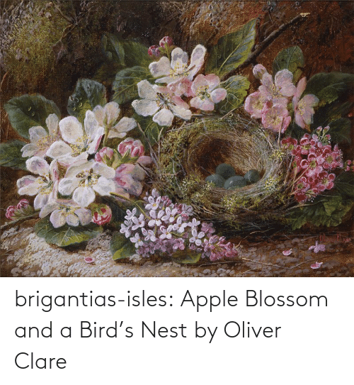 org: brigantias-isles:    Apple Blossom and a Bird's Nest   by Oliver Clare
