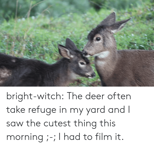 Deer, Saw, and Tumblr: bright-witch: The deer often take refuge in my yard and I saw the cutest thing this morning ;-; I had to film it.