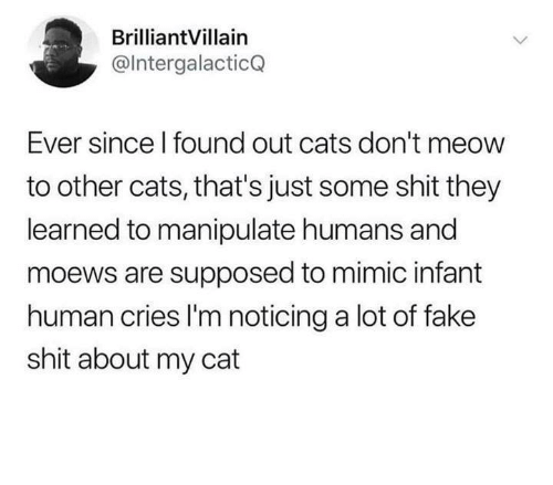 Cats, Fake, and Memes: BrilliantVillain  @lntergalacticQ  Ever since l found out cats don't meow  to other cats, that's just some shit they  learned to manipulate humans and  moews are supposed to mimic infant  human cries I'm noticing a lot of fake  shit about my cat