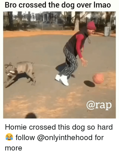 Homie, Lmao, and Memes: Bro crossed the dog over lmao  @rap Homie crossed this dog so hard 😂 follow @onlyinthehood for more