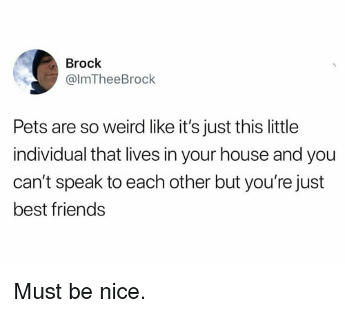 Friends, Funny, and Weird: Brock  @lmTheeBrock  Pets are so weird like it's just this little  individual that lives in your house and you  can't speak to each other but you're just  best friends Must be nice.